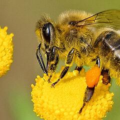 DoCS-Great-Georgia-Pollinator-Census-Web-Banner-2020